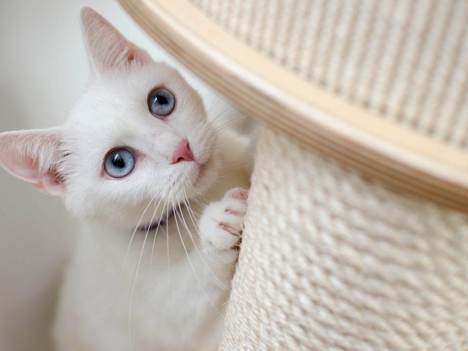 De leefomgeving van de kat