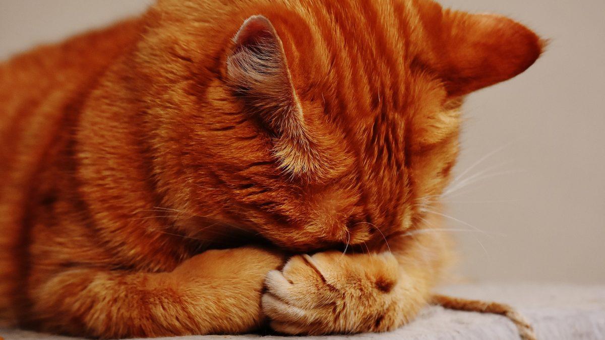 Gezondheid van de kat - Gezondheid van de kat e1582986320856