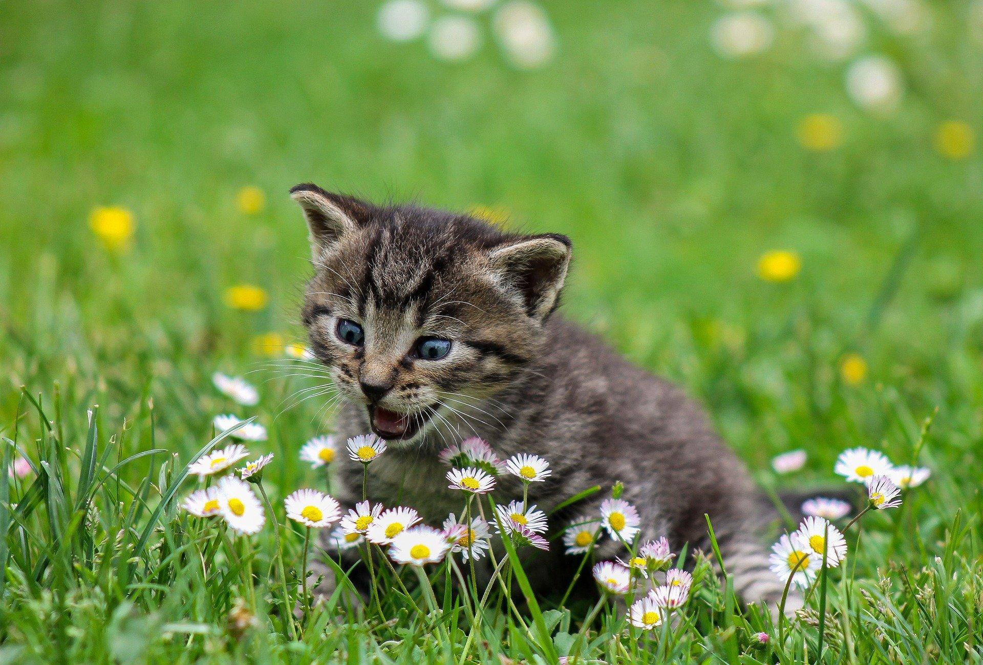 gedrag en de intelligentie van de kat