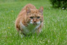 gedrag van de kat
