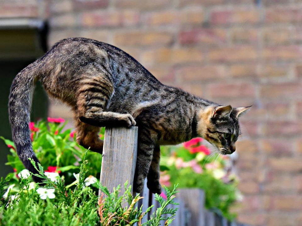 zorgen voor een kat - gevaar in huis en tuin