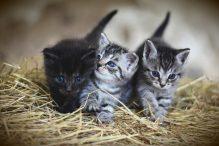 De aanschaf van je eerste kat