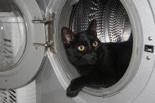Gevaarlijk voor katten is een wasmachine