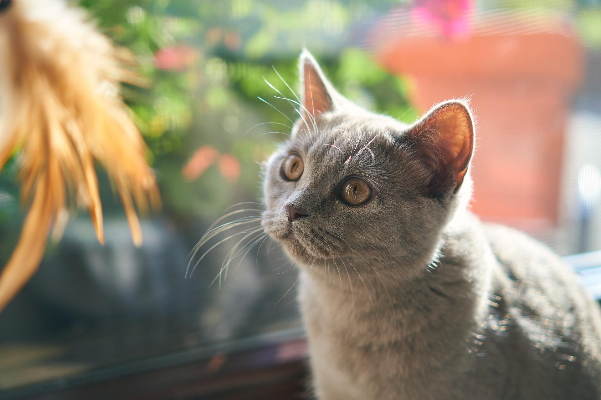 Gevaarlijk voor katten