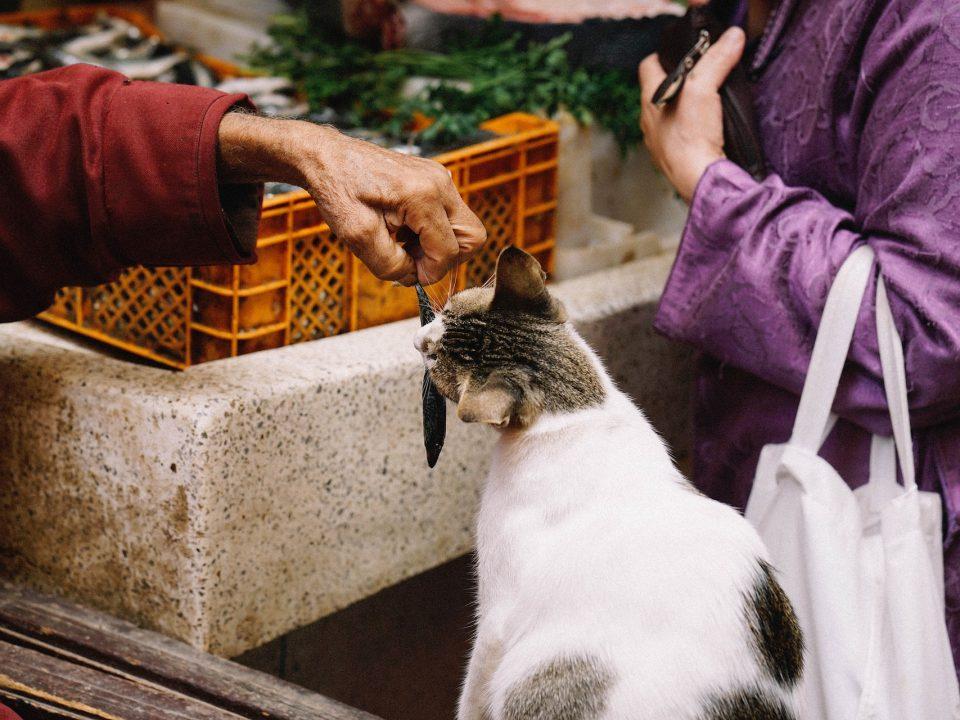 Welke kattenvoeding