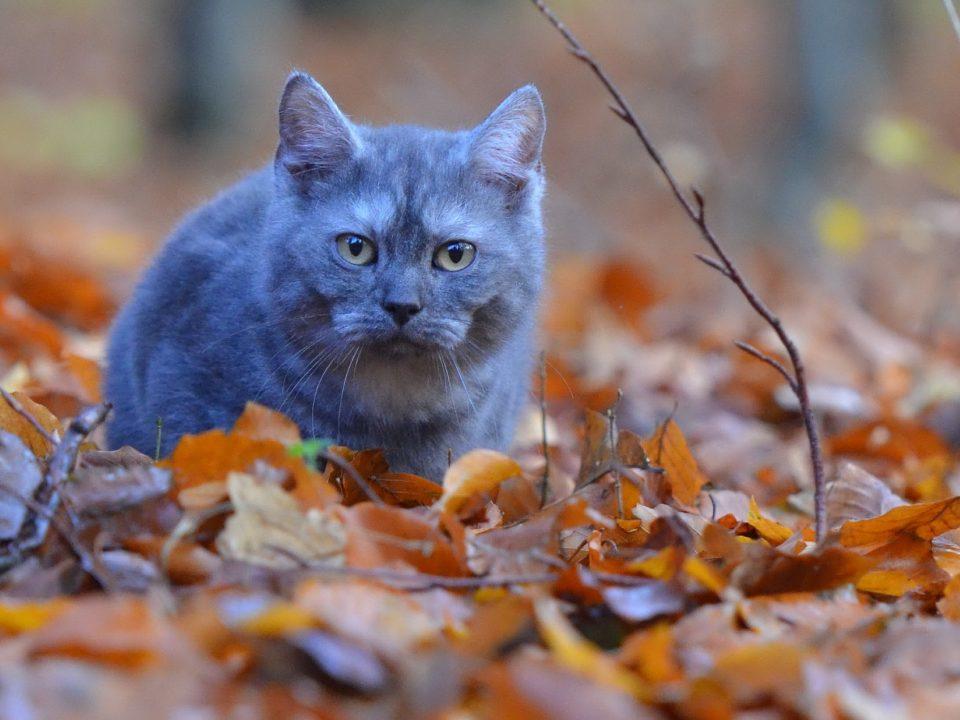 beweging voor oudere katten