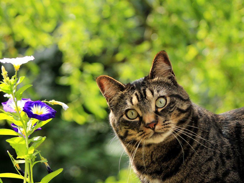 giftige bloemen en planten voor katten
