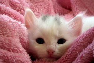 kattenrassen zoeker - welke kat past bij mij