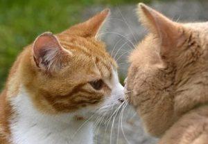 nuttige adressen katten en kittens