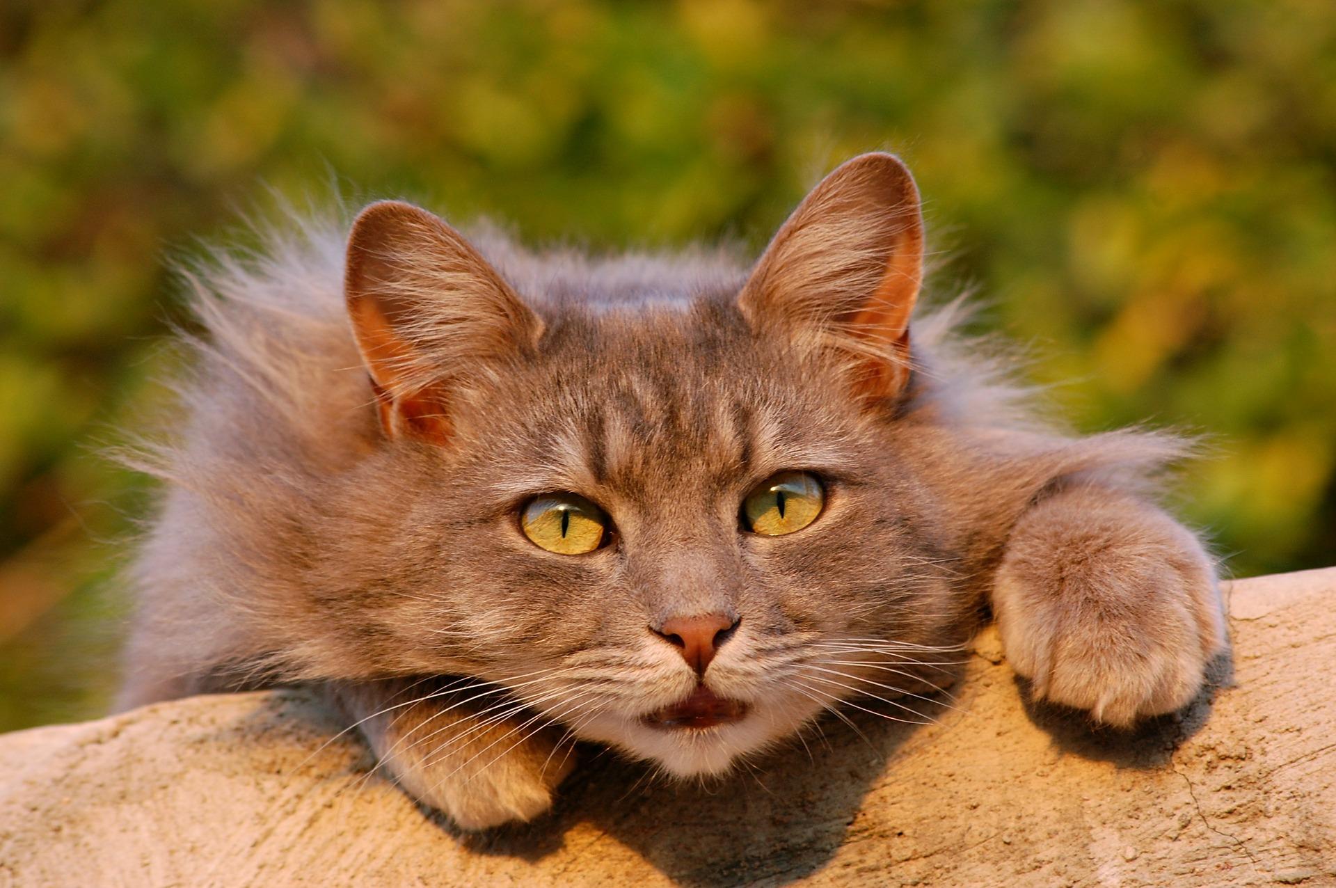 15 feiten over katten waardoor je er meer van zal houden