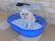 Mijn nieuwe kat verzekeren
