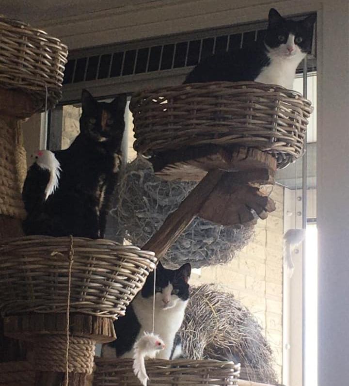 kattenboom zelf maken met katten