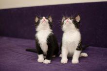 27 Bijzondere eigenschappen van katten