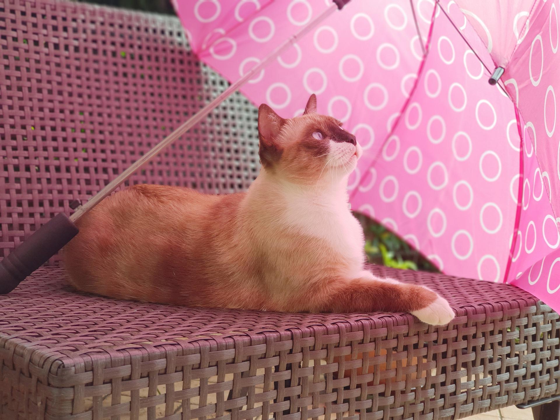 zesde zintuig bij katten