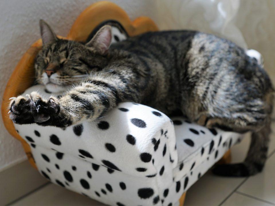 Kat krabt aan meubels en behang, hoe dit afleren