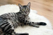 7 tips bij het aanschaffen van een kat