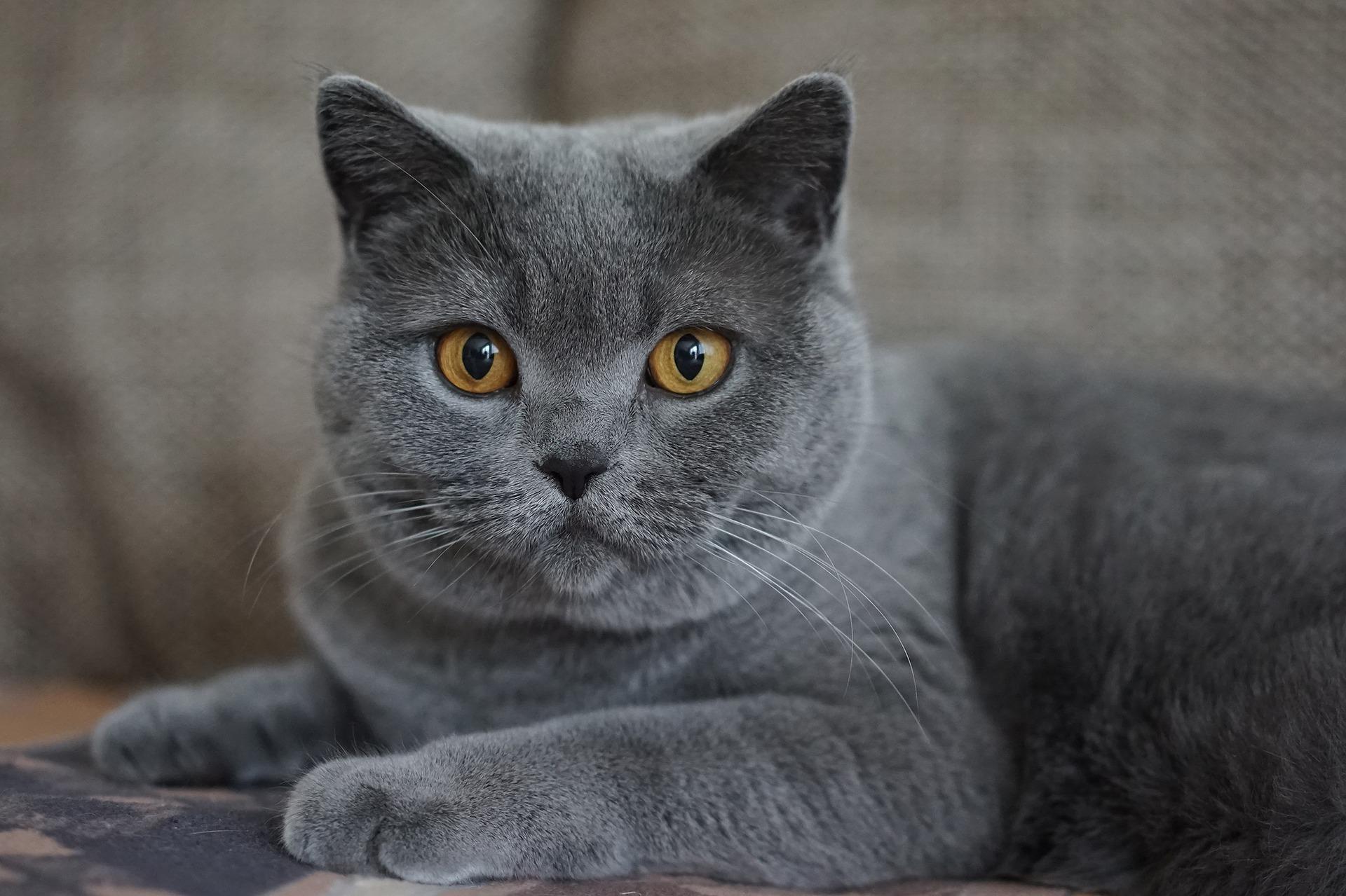 alle-kattenrassen-met-foto