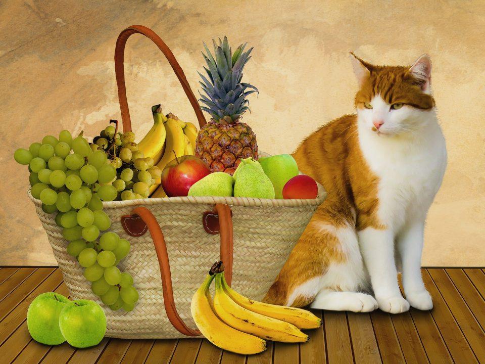 10 groenten en fruit die veilig en gezond zijn voor uw kat