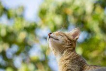 Waarom katten scheetjes laten